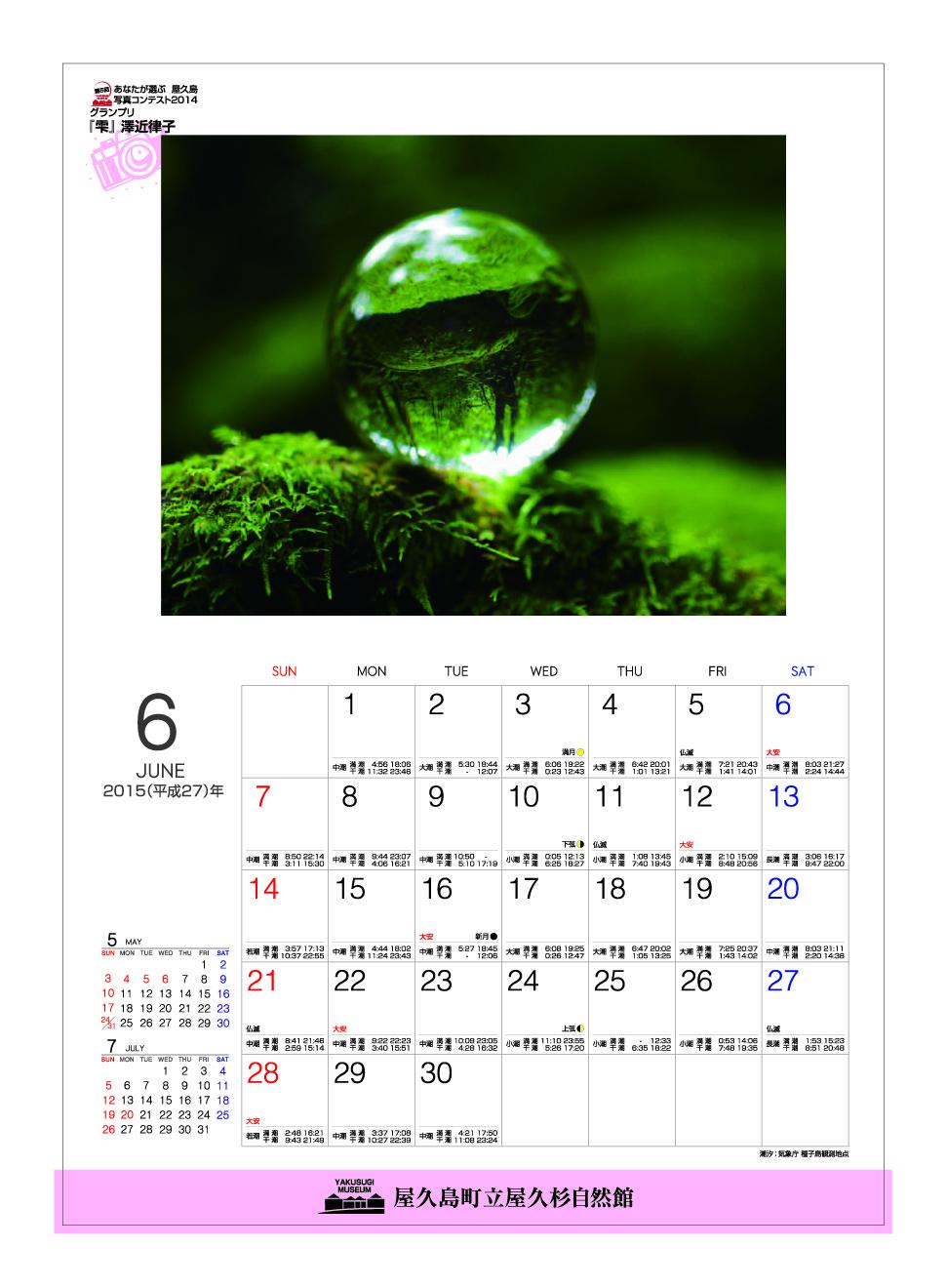 屋久杉自然館カレンダー/6月